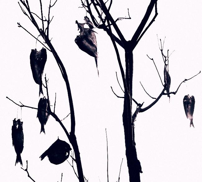 鱼在树上 它们最终被挂在树上 挂在冬天光光的树枝上 有的,甚至还保持着游的姿势 全部暴露在阳光下 那种境况 水下的兄弟是无法想象的 对于岸上的人类来说 犹如溺水的人沉睡在湖底 它们也许做过飞鸟的梦 在空中比水里更加自由 但它们从来也没有想到过 有一天,被挂在树上 西风吹来 离水三尺,身体前后左右 也会摆动 只是再也激不起半点水花