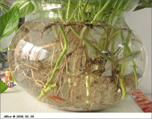 鱼缸里养鱼和养花水要几天换一回图片