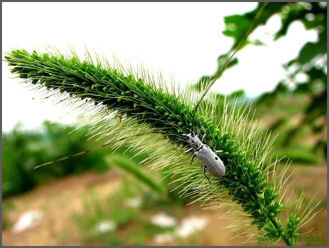 不知道这叫什么虫子,鬼节第一次亮相后一直叫它黑白无常.:P最后一