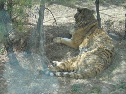 呼和浩特 野生动物园