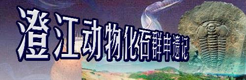 为澄江动物化石群申遗见证