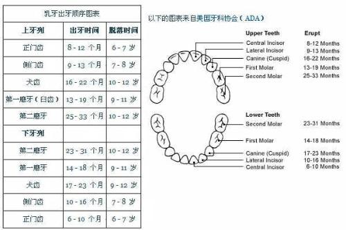 找到的乳牙出牙顺序图