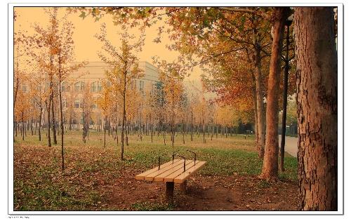 爱情的秋天秋天来了落叶黄了现在的你和他还好吗是否会想起我是否开心