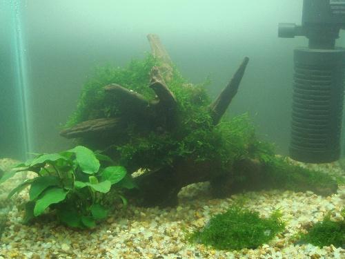 鱼缸石头木头造景图