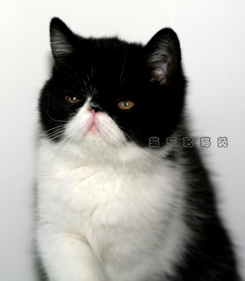 """我家的黑白版""""加菲猫"""""""