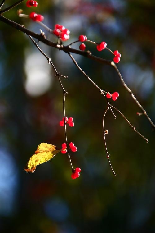 涩涩秋风中的落叶图片