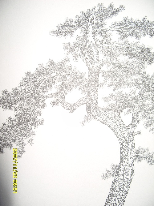 雪松手绘立面图