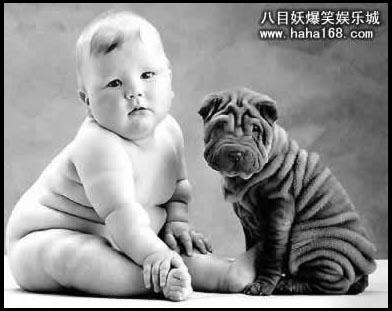 沙皮狗图标_皮的QQ说说再昂贵的狗粮也抚平不了沙皮狗的