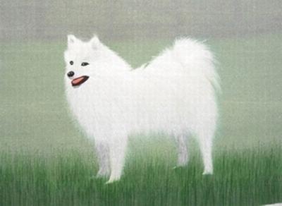 十二生肖记忆系列之狗篇(转载)