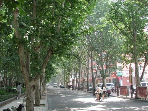 那个城市里的梧桐树_-南岸子
