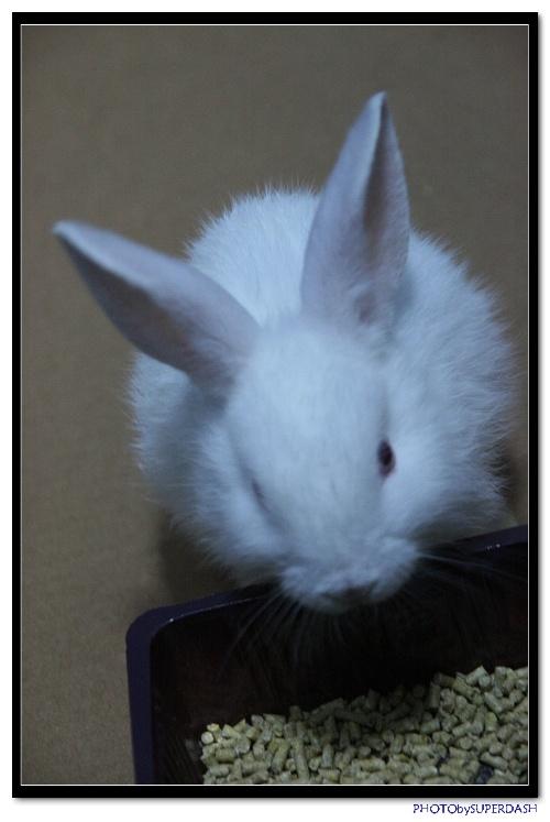 美丽可爱的小白兔_博学的馒头