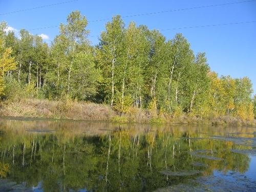 白杨树倒映在水中,更是一番别样风景,宛如大师笔下的油墨水彩