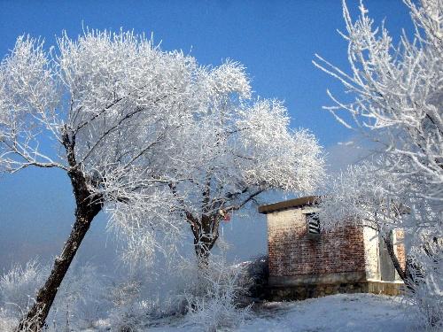 静静的白桦树
