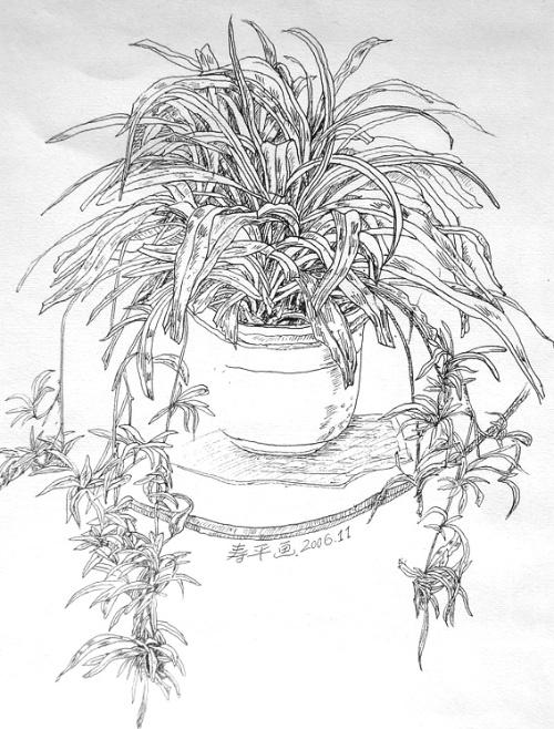 风景速写植物画法