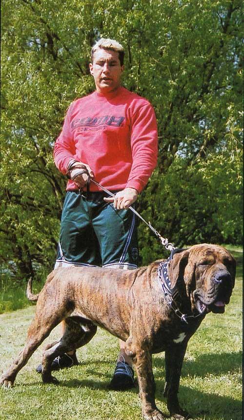 世界十大最凶猛的猛犬