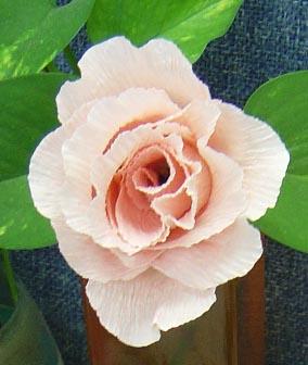 用纸怎样做玫瑰花-纸玫瑰图片