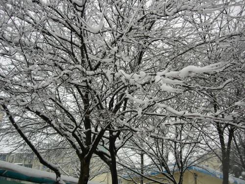 水,顺着树枝一滴一滴往树干下流,一直渗入到树根;钻到树根下的雪水又