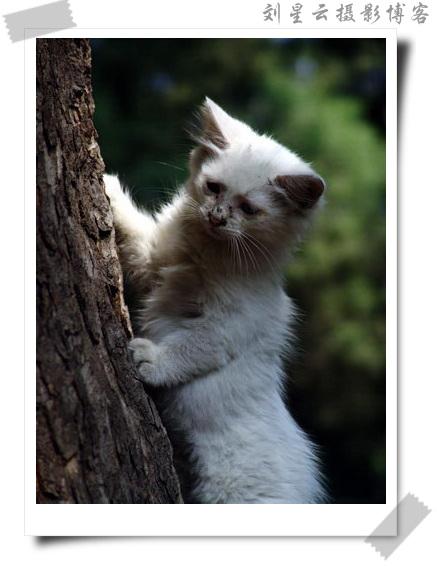 野外生存的小猫咪(可爱的动物95)