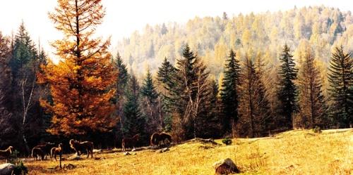 庞泉沟,是以保护国家一类野生动物褐马鸡为主的森林生态型自然保护区