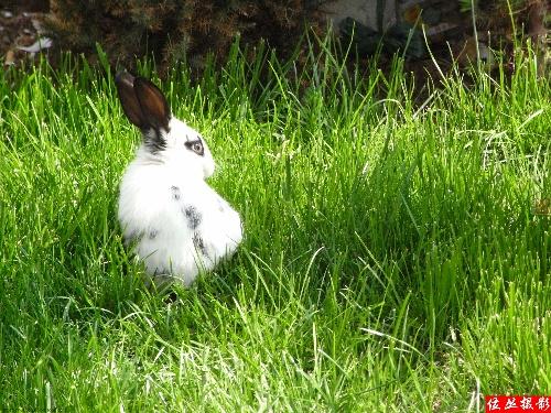 超级可爱的小兔子(11p)
