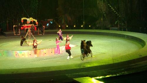 香江野生动物园大马戏团(图)