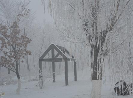 这个简单的木屋更加具有了神秘的色彩,右侧的一棵来自老校区的老柳树