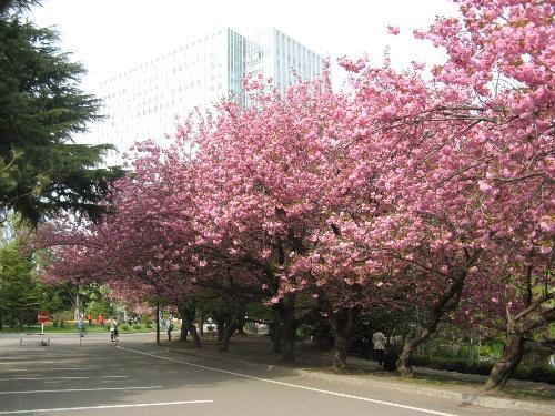 不过春天来了,就又开满树的花朵